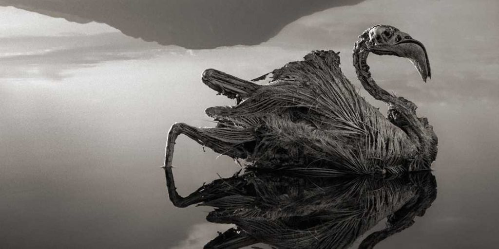 Lake Natron | 15 Weirdest Places Around The World You Should Visit In 2020 | ZestRadar