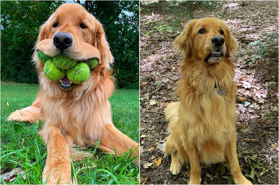 Dog Obsessed With Tennis Balls Breaks A Record | Zestradar