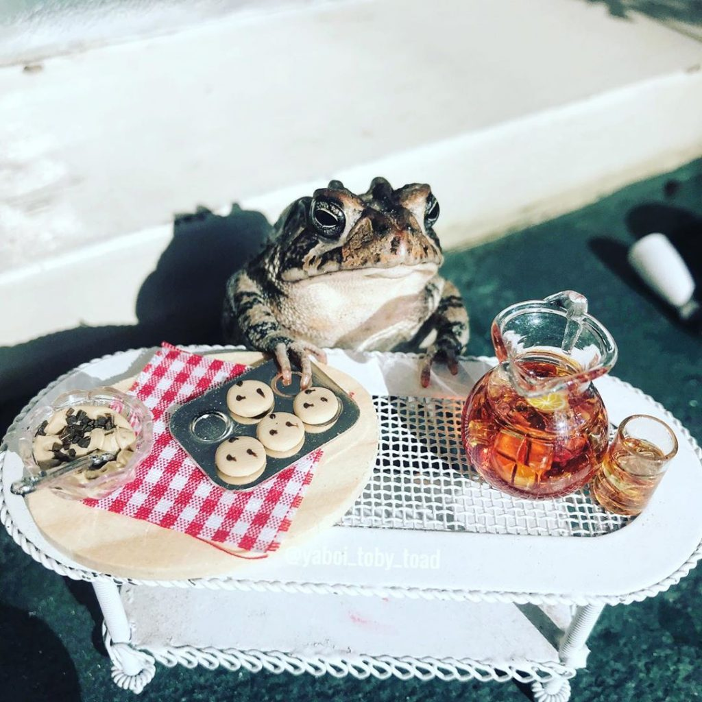 Meet the Internet's Newest Obsession: Toby, the Toad! #2 | Brain Berries