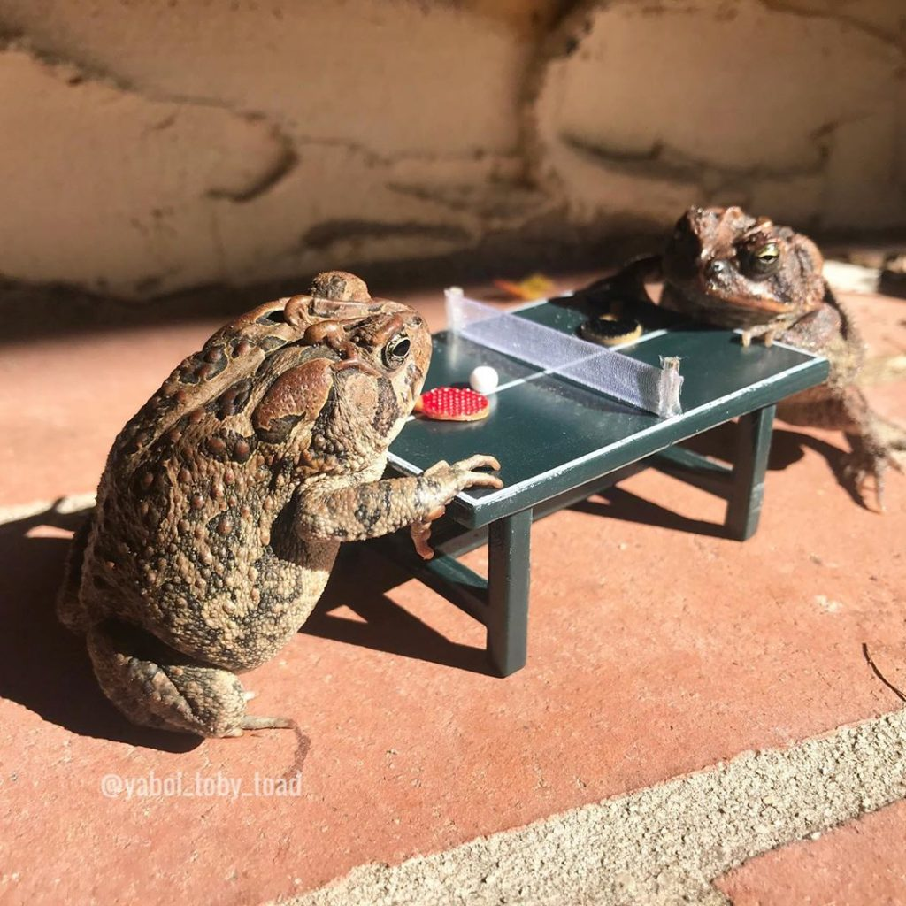 Meet the Internet's Newest Obsession: Toby, the Toad! #3 | Brain Berries
