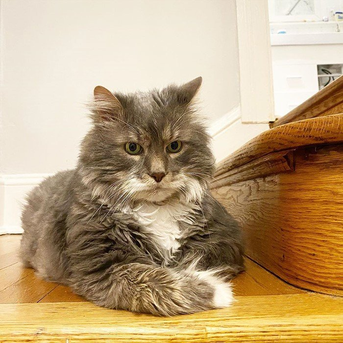 This image has an empty alt attribute; its file name is Wilford-The-Cat-3.jpg