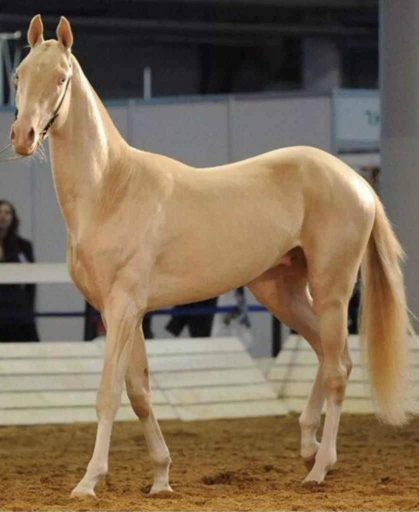 Wanna See The Most Beautiful Horse On Earth? #6 | Zestradar