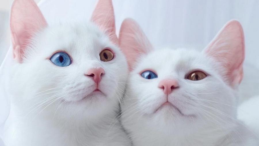 Као мани | 10 самых красивых пород домашних кошек | Zestradar