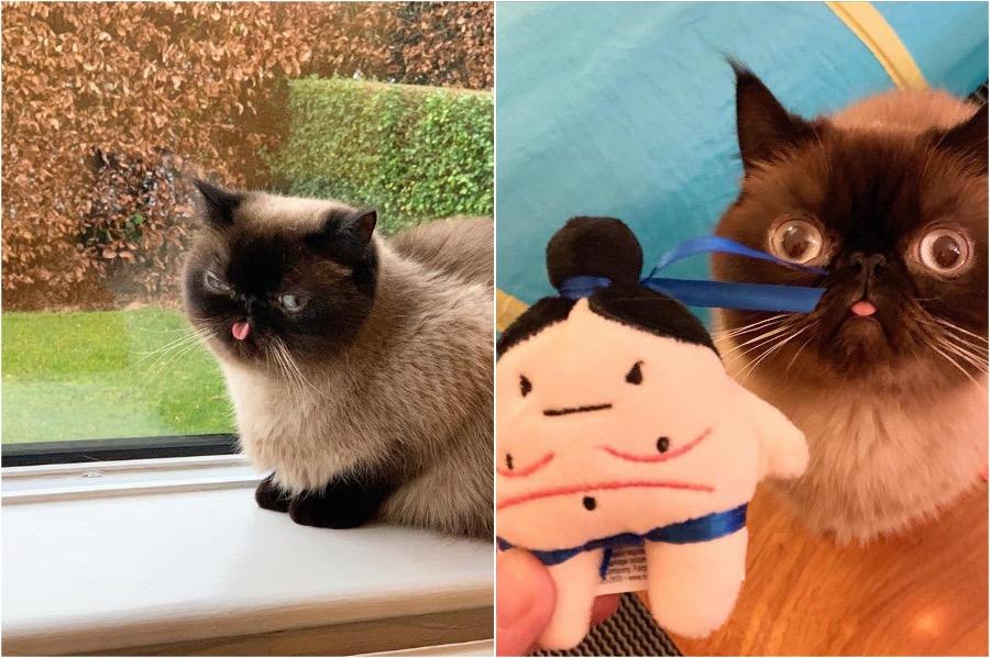 Meet Ikiru The Cat King Of Blep #5 | Zestradar