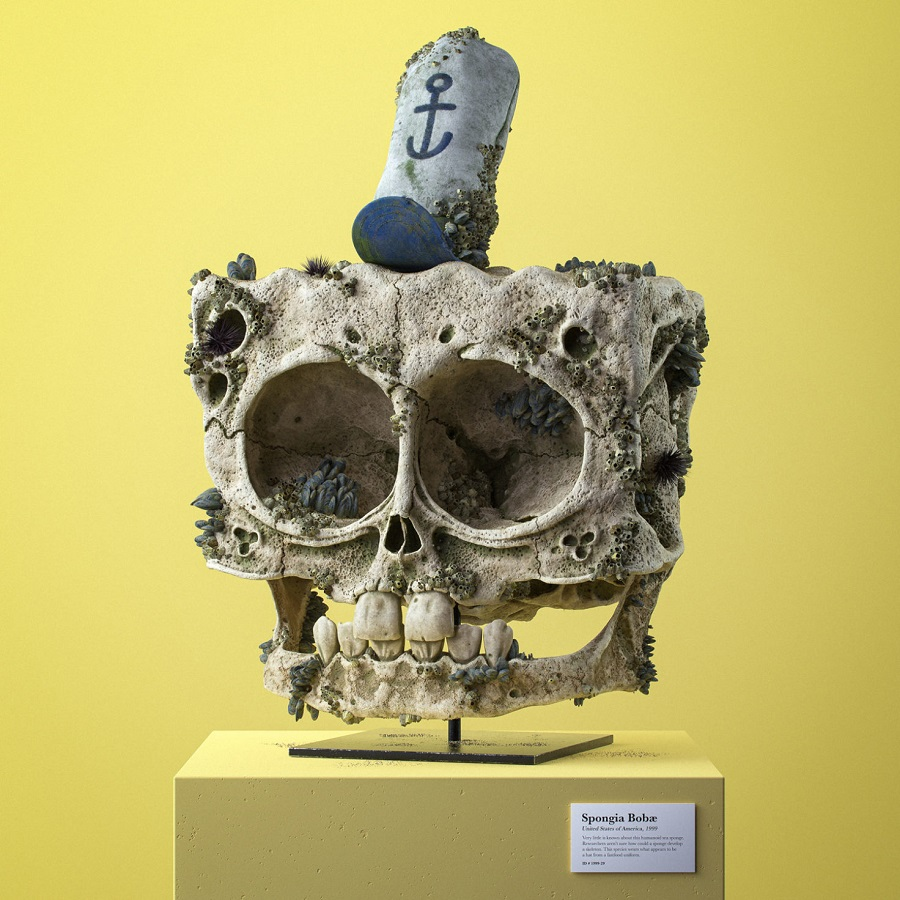 Spongia Bobæ – USA, 1999 | Fossilized Skulls Of Our Beloved Cartoon Characters | Zestradar