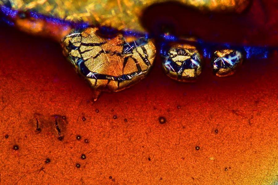 Кофе под микроскопом | Предметы под микроскопом: удивительный макромир | Zestradar