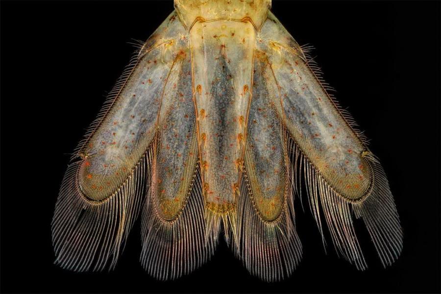 Хвост креветки под микроскопом | Предметы под микроскопом: удивительный макромир | Zestradar