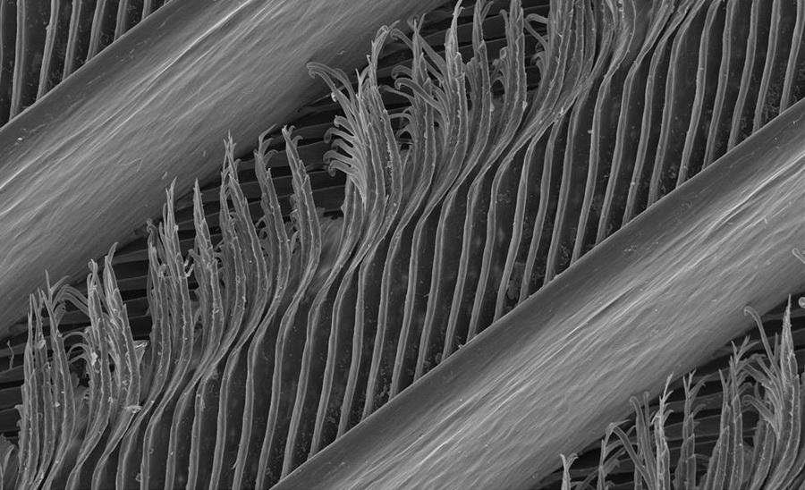 Гусиное перо | Предметы под микроскопом: удивительный макромир | Zestradar