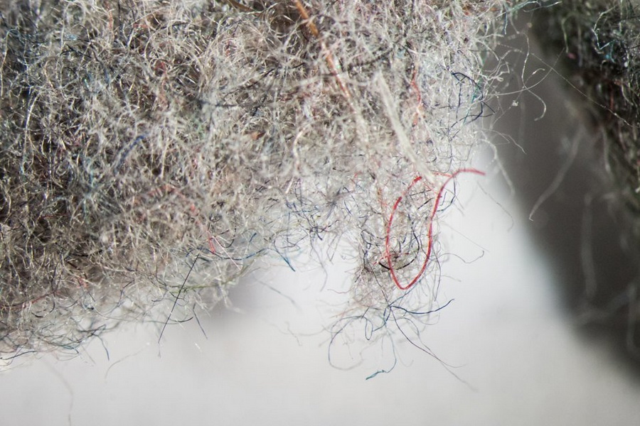 Пыль | Предметы под микроскопом: удивительный макромир | Zestradar