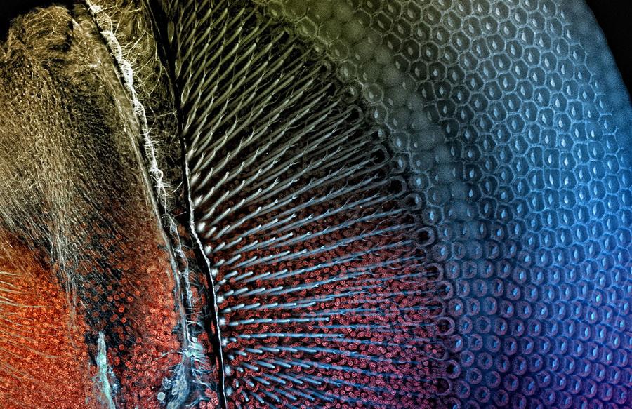 Глаз стрекозы | Предметы под микроскопом: удивительный макромир | Zestradar