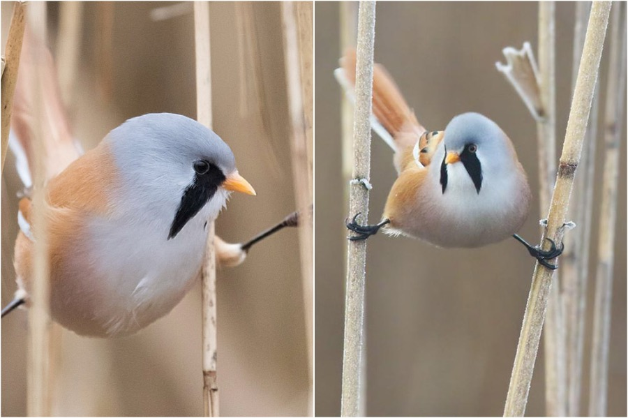 #2 | These Moustached Fluffy Birds Will Make Your Day | Zestradar