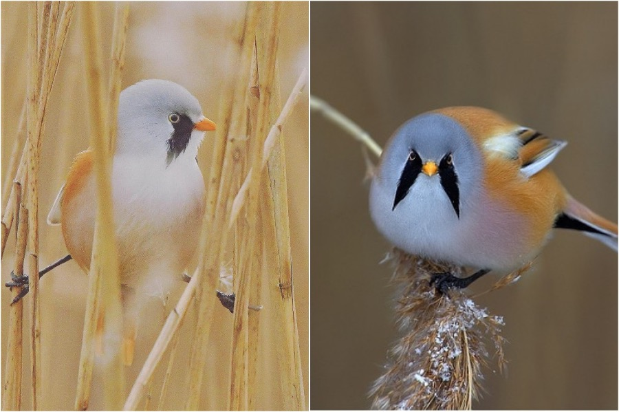 #3 | These Moustached Fluffy Birds Will Make Your Day | Zestradar