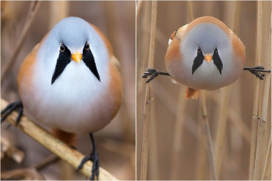 #5 | These Moustached Fluffy Birds Will Make Your Day | Zestradar