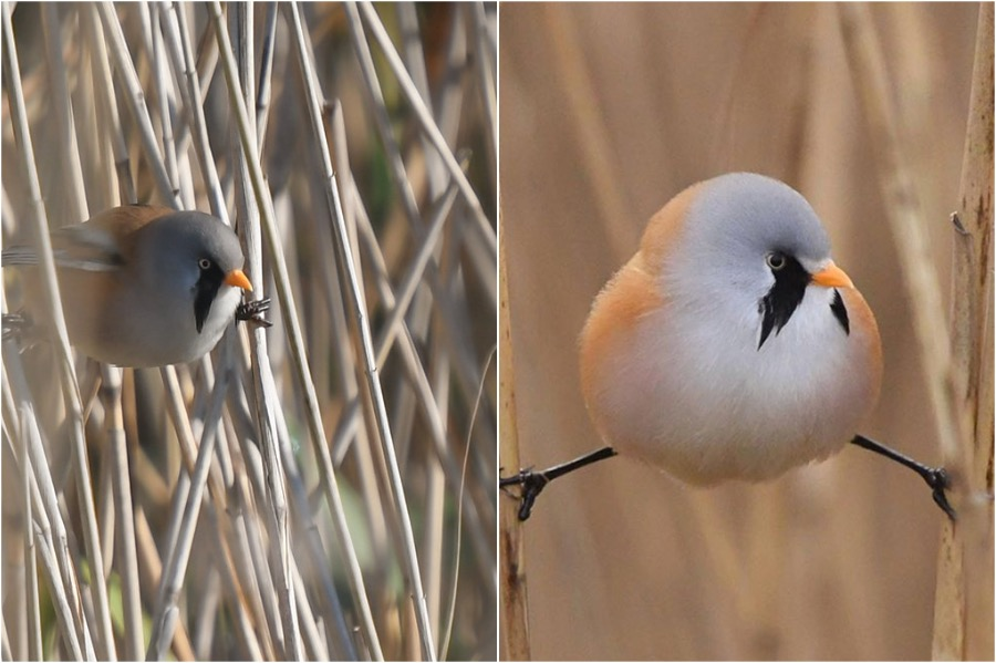 #6 | These Moustached Fluffy Birds Will Make Your Day | Zestradar