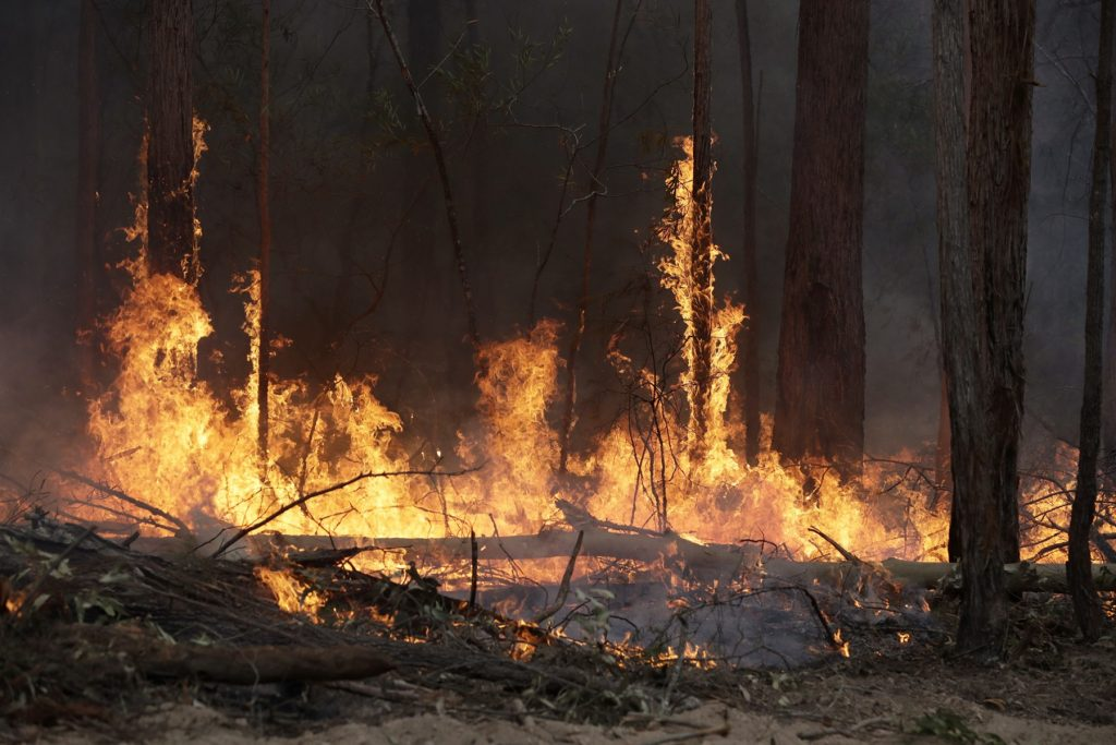 | Forest Fire Near Chornobyl Almost Caused Another Nuclear Disaster | Brain Berries