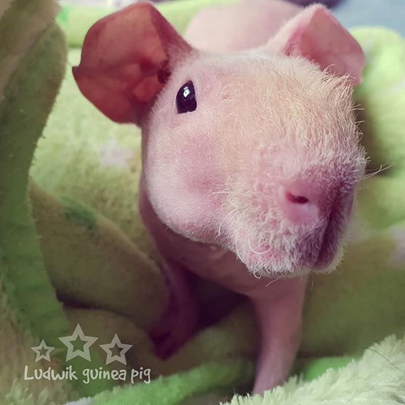 | Unusual Animals That Still Look Charming | Brain Berries