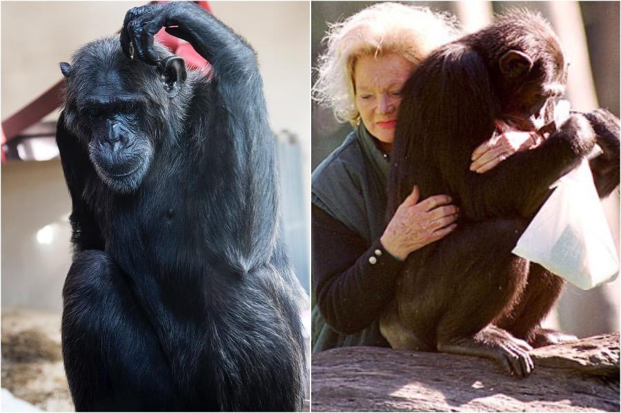Kalu | 10 Richest Animals In The World | Zestradar