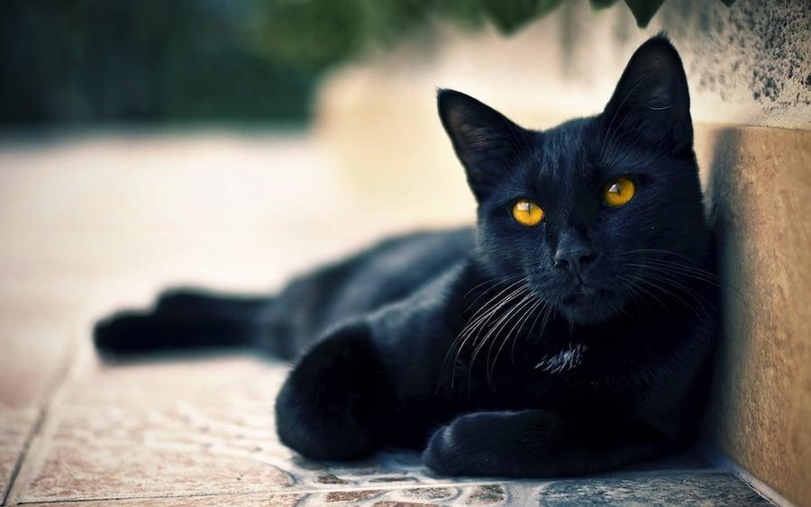 Blackie | 10 Richest Animals In The World | Zestradar
