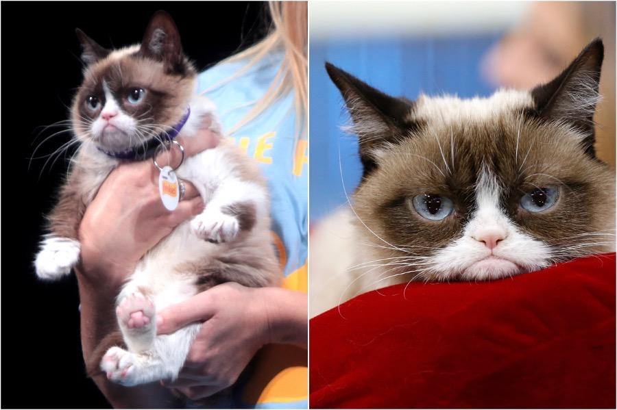 Grumpy Cat | 10 Richest Animals In The World | Zestradar