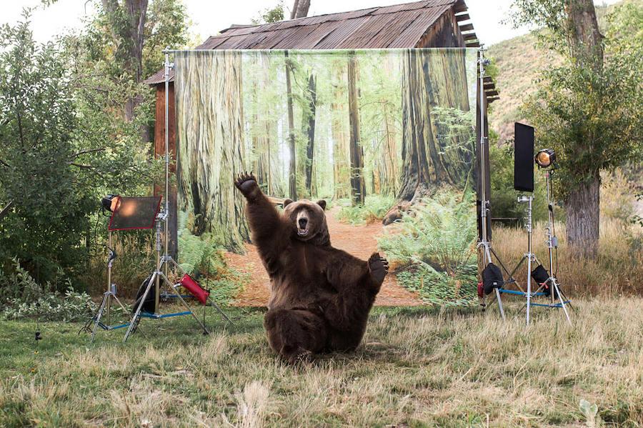 Bart the Bear II | 10 Richest Animals In The World | Zestradar