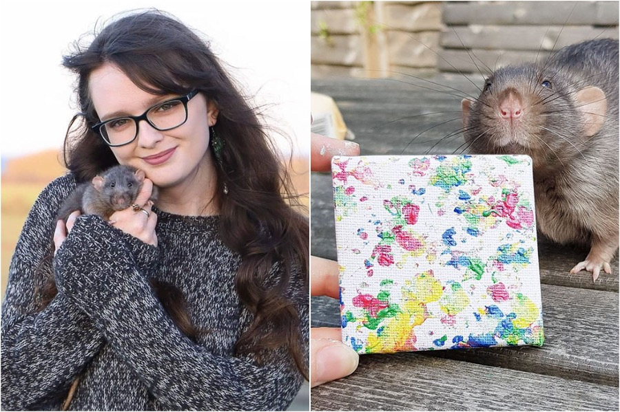 #1 | Tiny Paintings Done By Rats Will Brighten Your Day | Zestradar