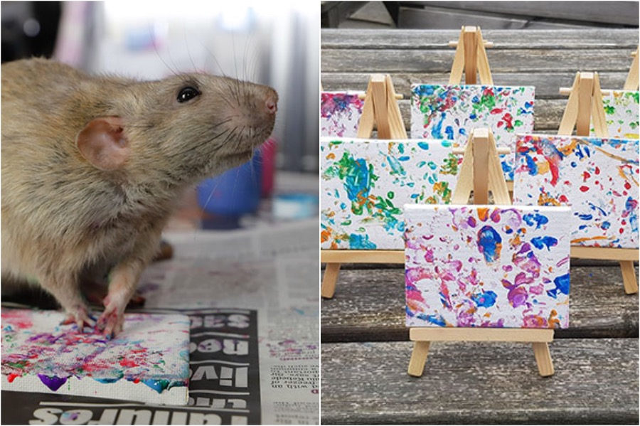 #2 | Tiny Paintings Done By Rats Will Brighten Your Day | Zestradar