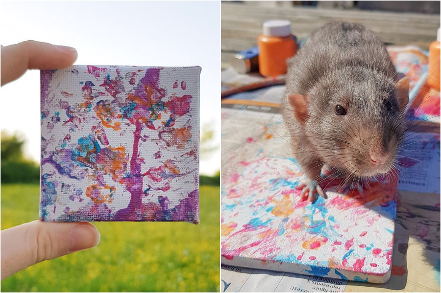 #4 | Tiny Paintings Done By Rats Will Brighten Your Day | Zestradar