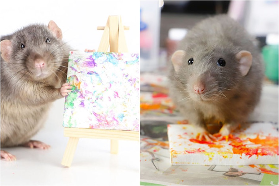 #5 | Tiny Paintings Done By Rats Will Brighten Your Day | Zestradar