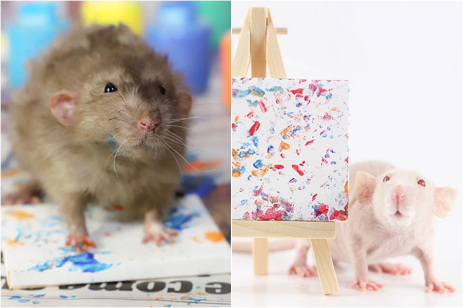 #6 | Tiny Paintings Done By Rats Will Brighten Your Day | Zestradar