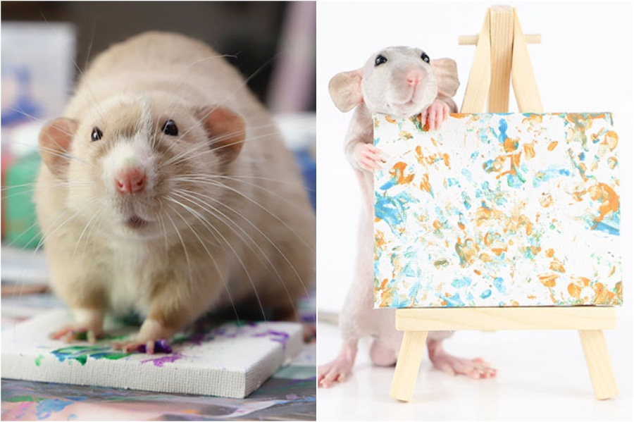 #7 | Tiny Paintings Done By Rats Will Brighten Your Day | Zestradar