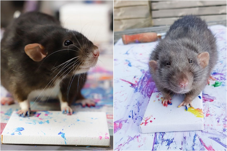 #8   Tiny Paintings Done By Rats Will Brighten Your Day   Zestradar