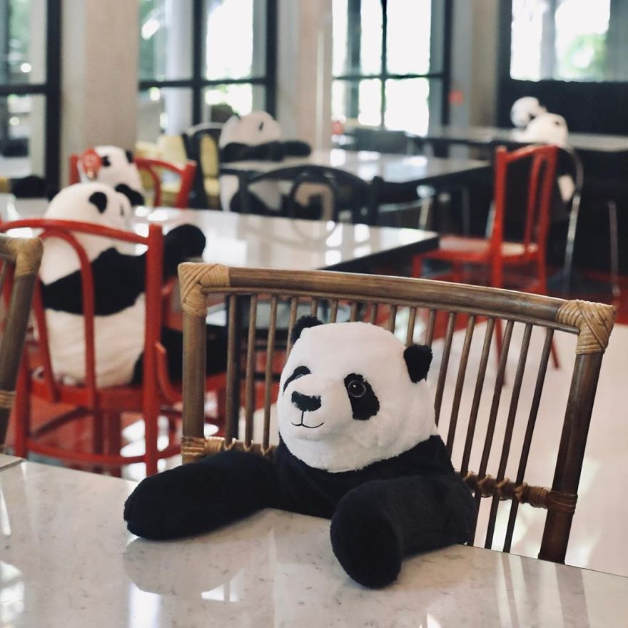 #1 | Restaurant in Thailand Brings Pandas to the Table to Promote Social Distancing | Zestradar
