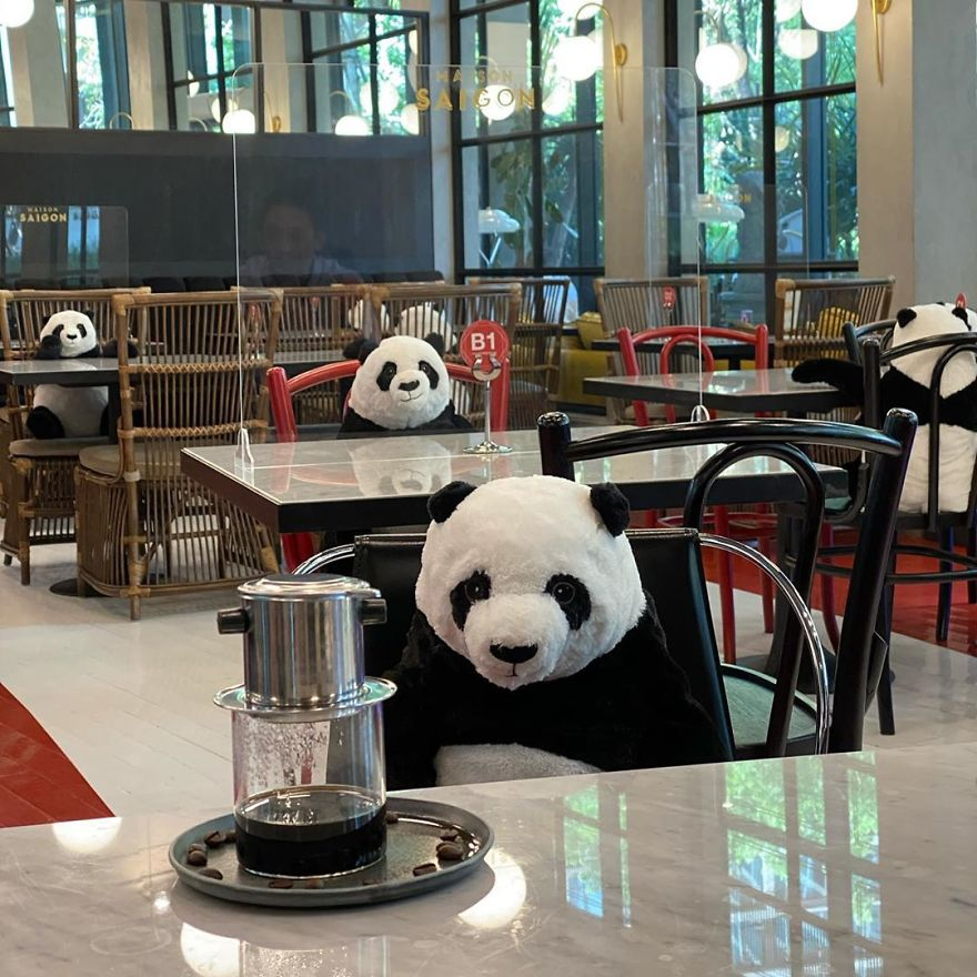 #11 | Restaurant in Thailand Brings Pandas to the Table to Promote Social Distancing | Zestradar