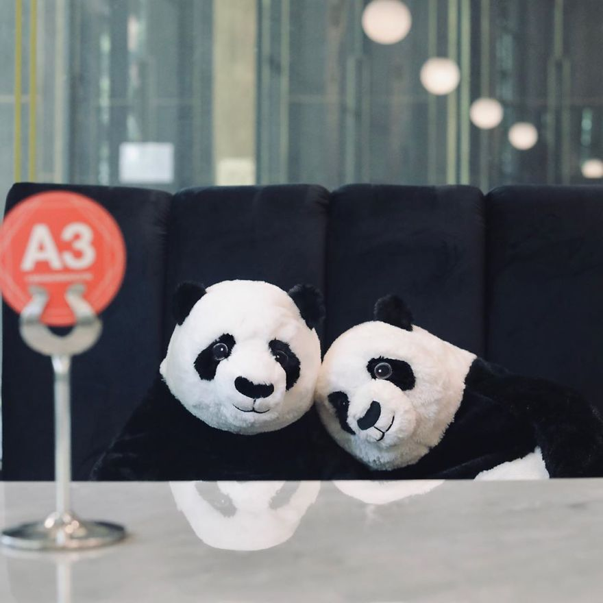 #2 | Restaurant in Thailand Brings Pandas to the Table to Promote Social Distancing | Zestradar