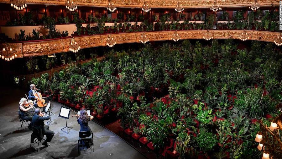 Barcelona Celebrated The End Of Lockdown With A Concert For Plants | Brain Berries