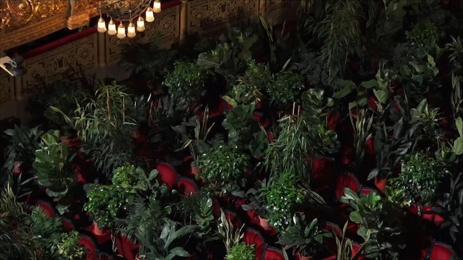 Barcelona Celebrated The End Of Lockdown With A Concert For Plants #5 | Brain Berries