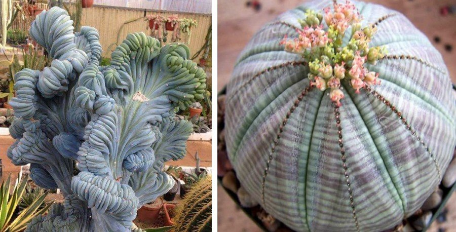 15 Beautiful Succulents That Look Like Something from Another Planet | Zestradar