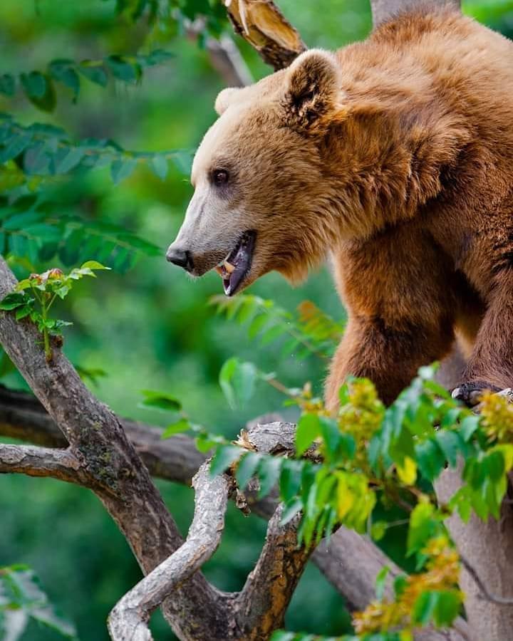 #13 | Дикие и изящные животные: фотограф из Македонии делает уникальные кадры | Zestradar