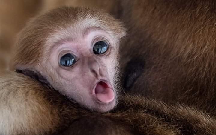 Дикие и изящные животные: фотограф из Македонии делает уникальные кадры | Zestradar