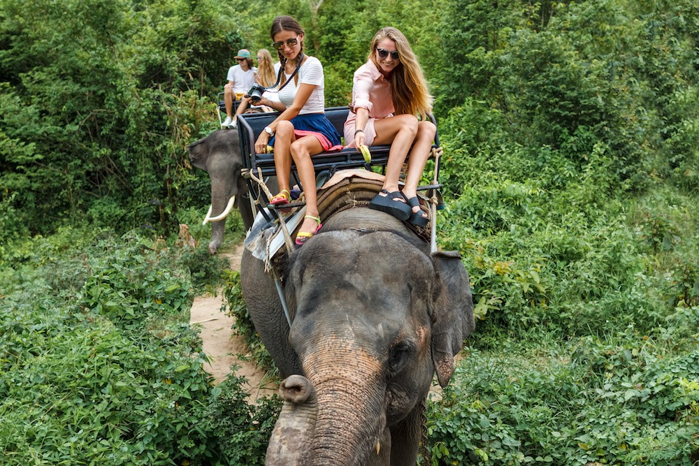 7 Tourist Attractions That Are Actual Torture for Animals #3 | Brain Berries