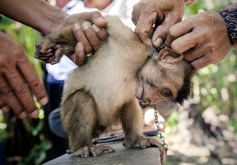 7 Tourist Attractions That Are Actual Torture for Animals #6 | Brain Berries