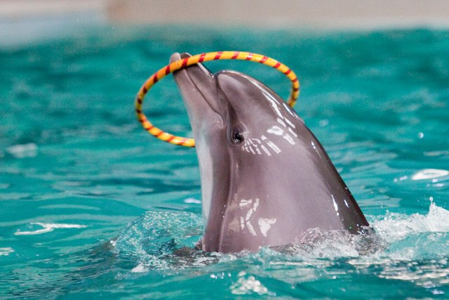 7 Tourist Attractions That Are Actual Torture for Animals #7 | Brain Berries