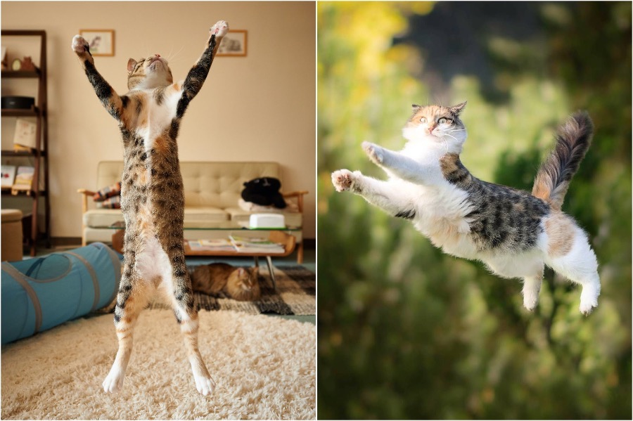 The Ultimate Flying Cats | Brain Berries