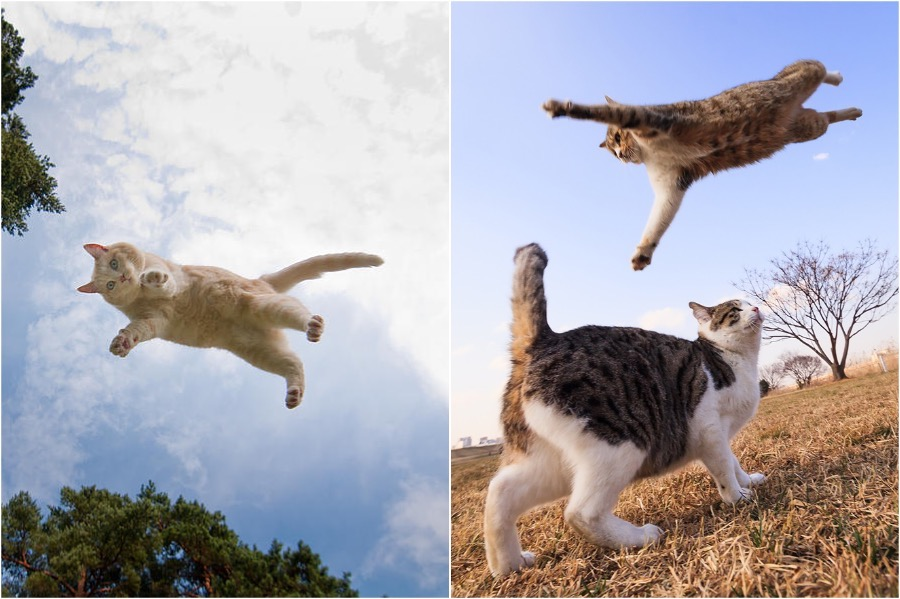 The Ultimate Flying Cats #3 | Brain Berries