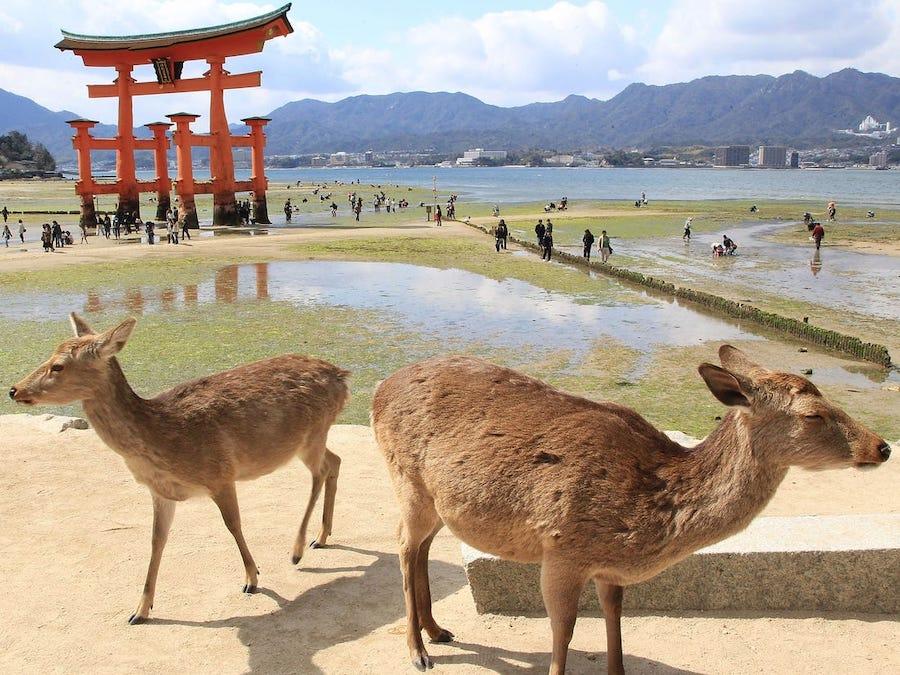 8. Miyajima, Japan | 8 Of The Best Places To Camp Around The World | Brain Berries