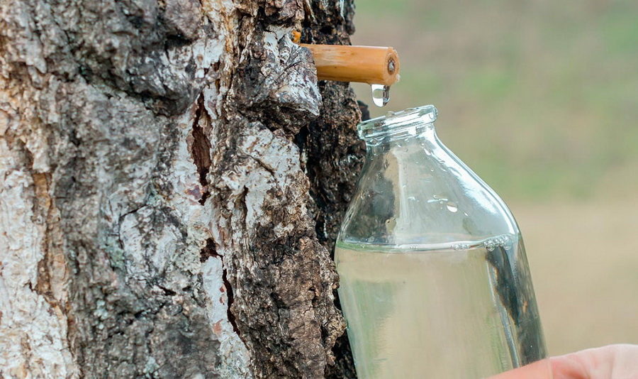 Березовый сок | 12 продуктов, которые едят только в  постсоветских странах | Zestradar