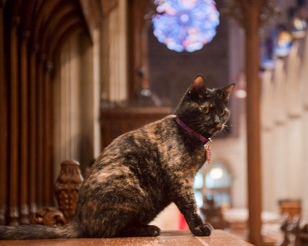 Cats in Places of Worship: They Still Don't Care | Brain Berries