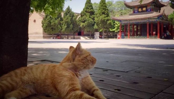 Cats in Places of Worship: They Still Don't Care #10 | Brain Berries