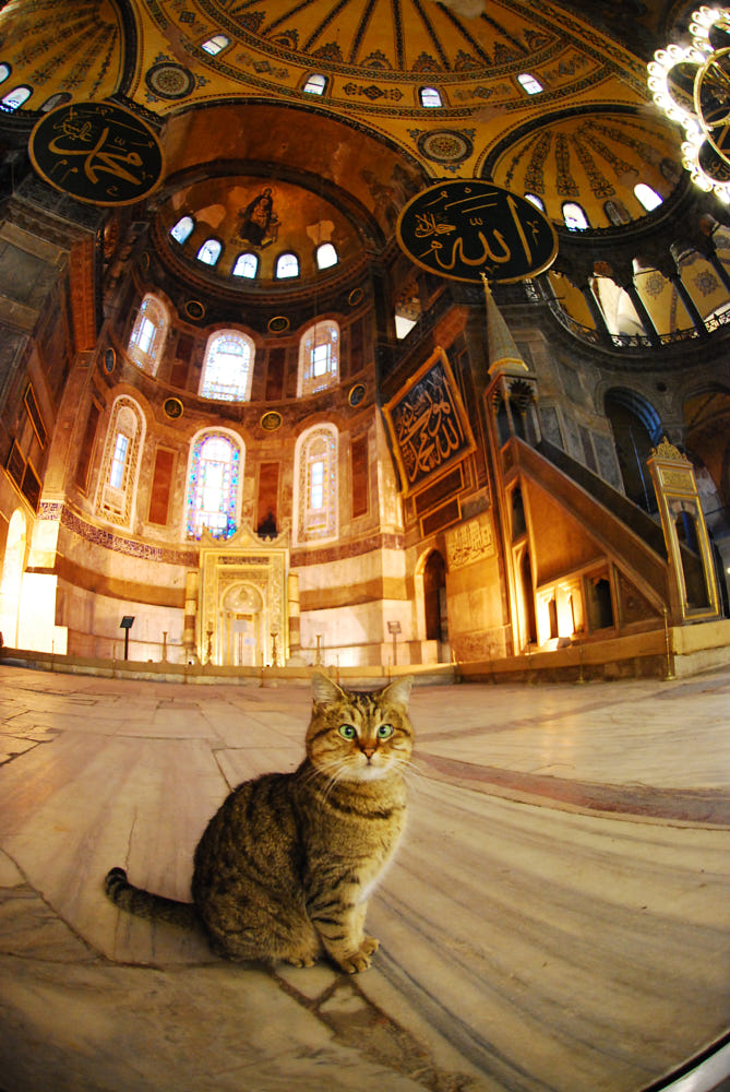 Cats in Places of Worship: They Still Don't Care #11 | Brain Berries