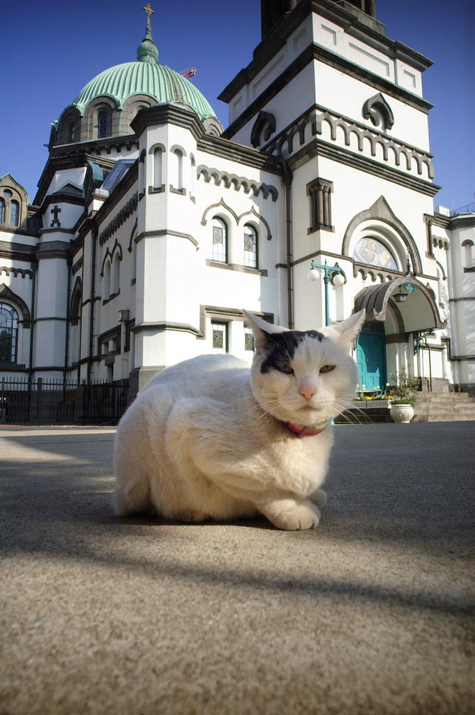 Cats in Places of Worship: They Still Don't Care #13 | Brain Berries